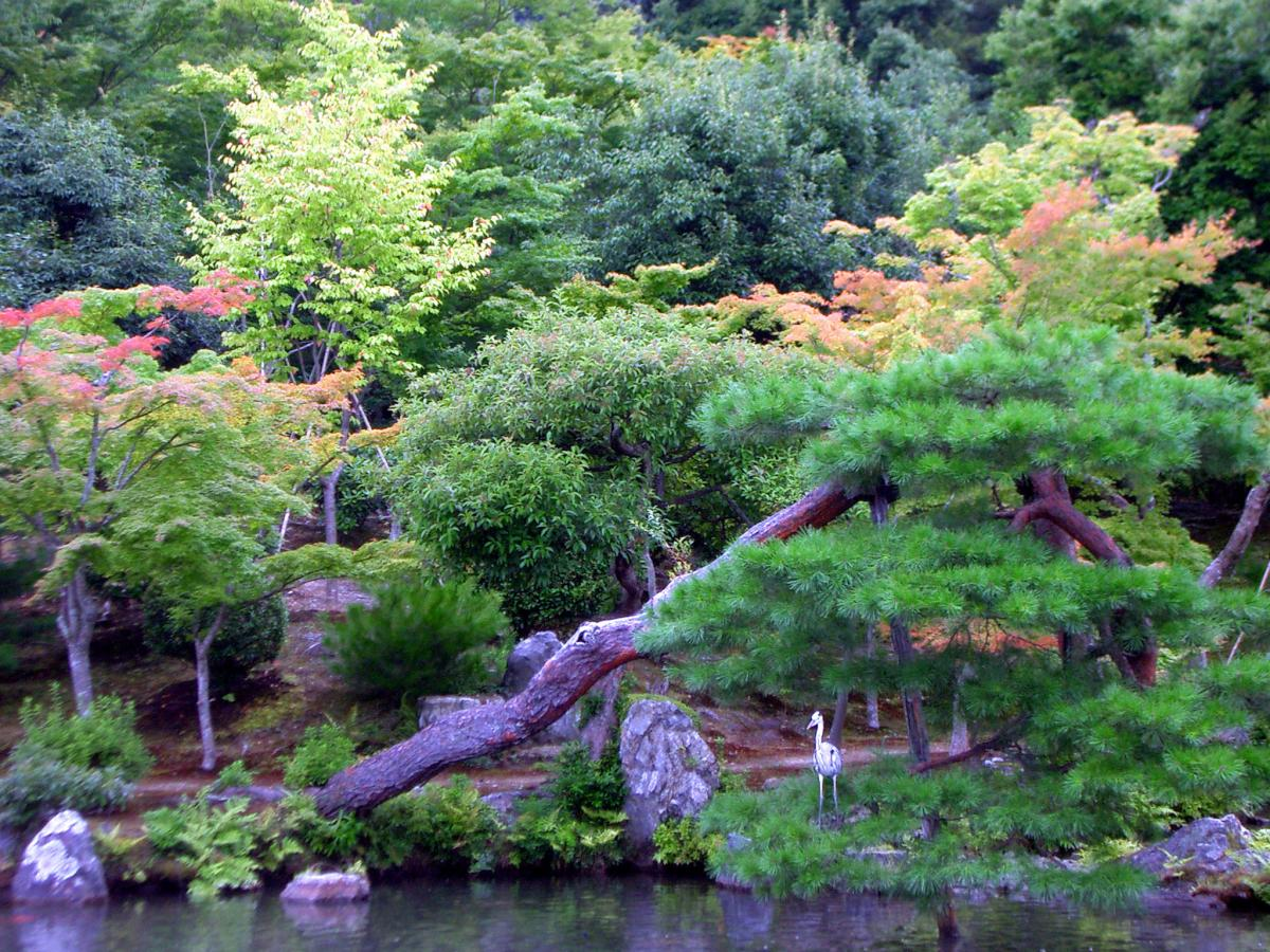 Peaceful landscape in japan japanese garden in kyoto city for Garden city trees