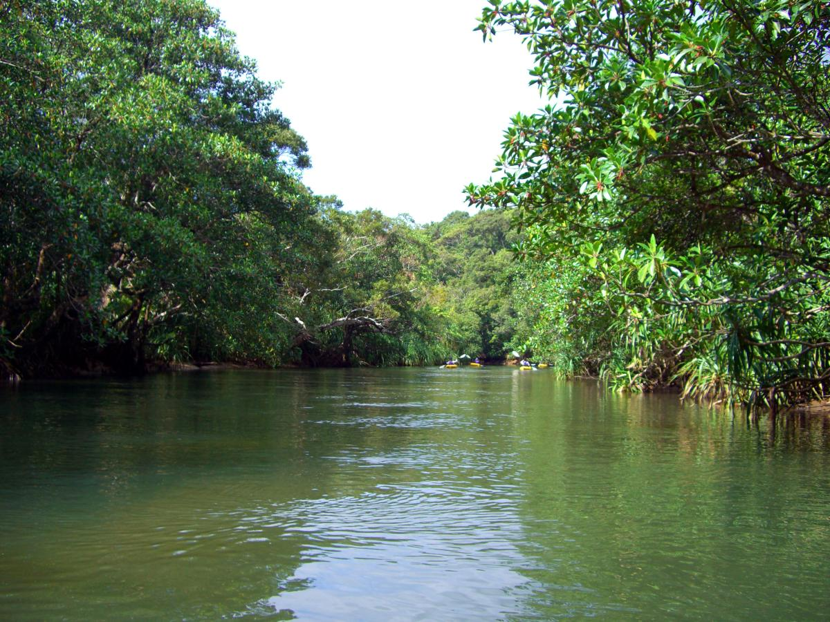 View from a canoe on a river in the jungle of 西表島 (Iriomote island, Japan) on 31 October 2008.