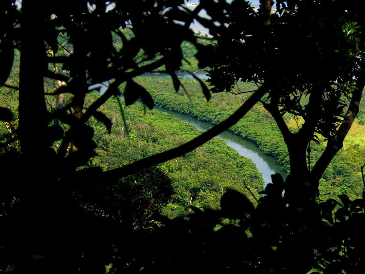 River seen from the jungle of 西表島 (Iriomote island, Japan) on 31 October 2008.
