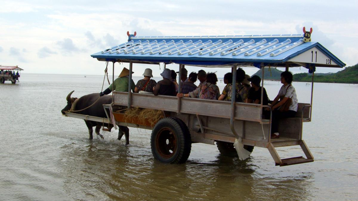 Tourists in a cart pulled by a water buffalo crossing the sea between 西表島 (Iriomote island, Japan) and 由布島 (Yubu island) on 01 November 2008.